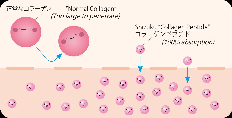 Shizuku collagen peptides